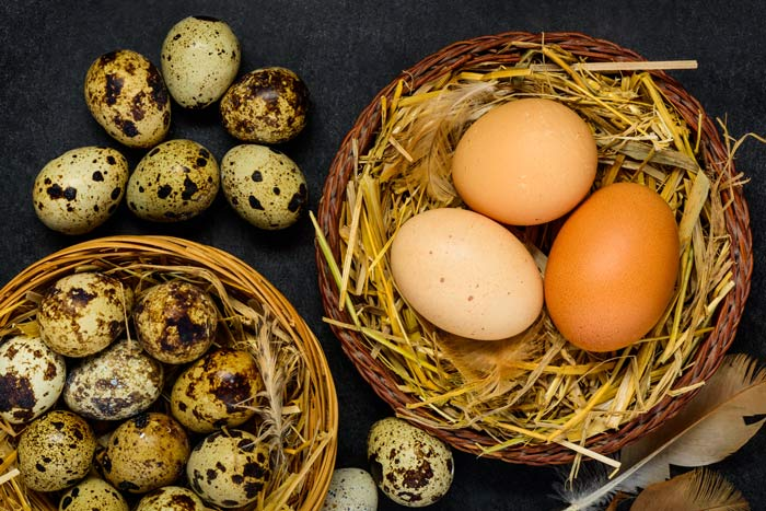 Eier von Wachteln und Hühnern