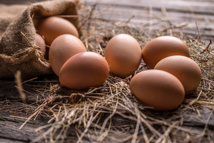 mehrere braune Hühnereier im Stall auf Stroh